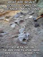 Some advance the ridiculous lie that they are there because the mountains rose. If you believe that, I have a great deal for you on swampland in Florida.